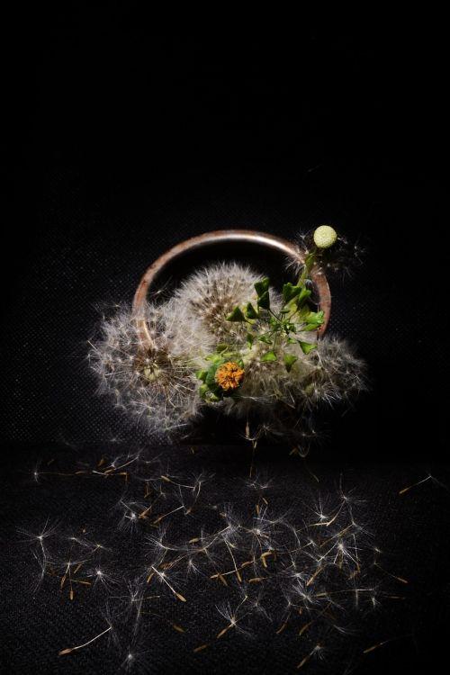 dandelion still life composition