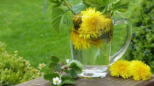 dandelion taraxum tee