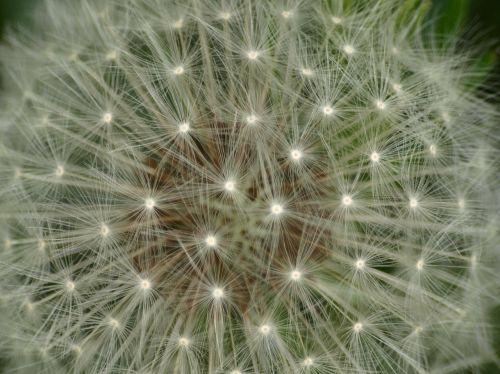 dandelion close roadside