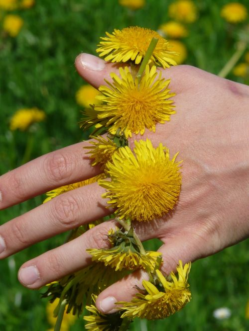 dandelion dandelion crown wreath