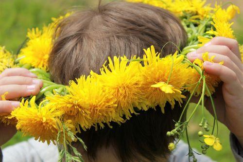 dandelions a wreath of dandelions yellow flowers