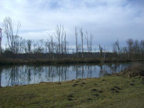 danube river bank