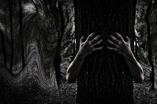dark mystery forest