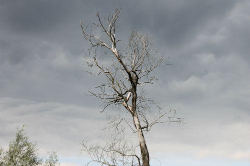 dark tree sky