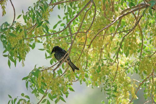 Dark Bird In Tree