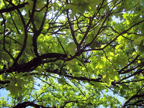 Dark Branches & Bright Leaves