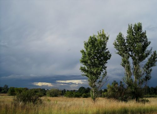Dark Clouds With Trees And Veld