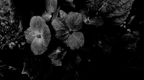 dark flowers black dark