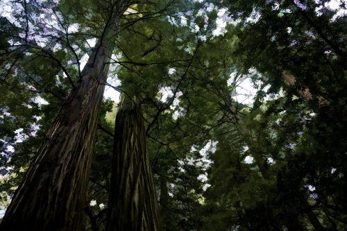 Dark Forest Trees