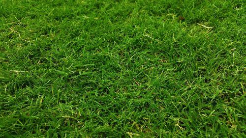 dark green golf green grass