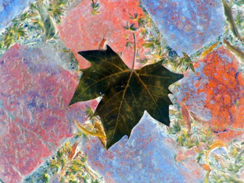 Dark Leaf On Paving