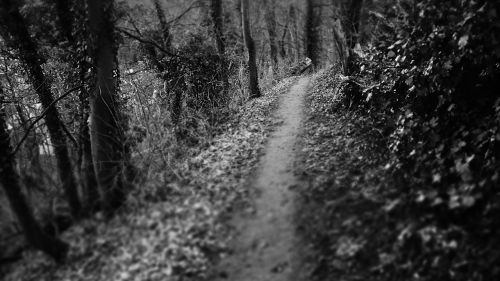 dark path path woods