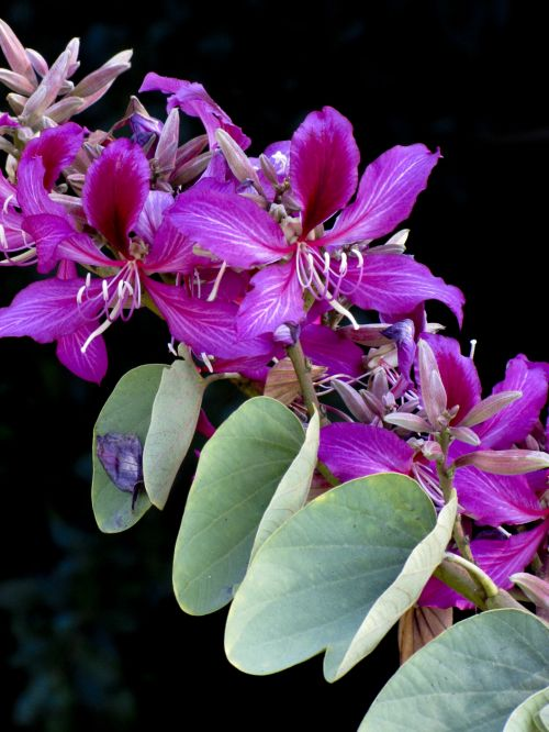 Dark Pink Tropical Flower