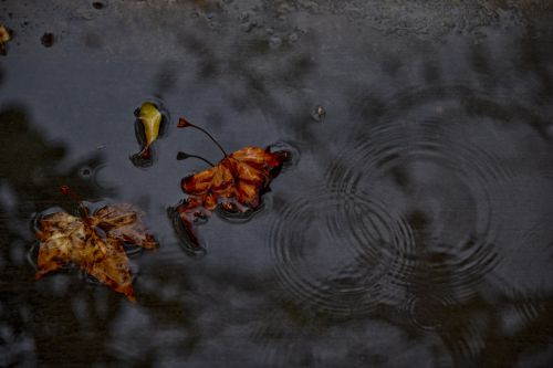 Dark Puddle Of Water