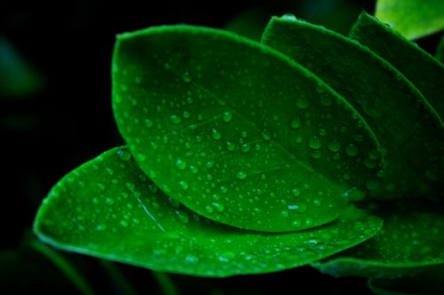daun pakis tumbuhan indonesia