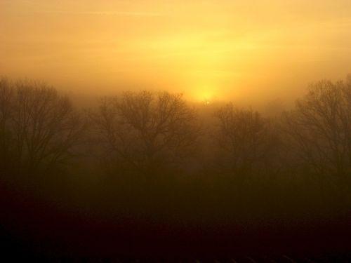 dawn mist trees