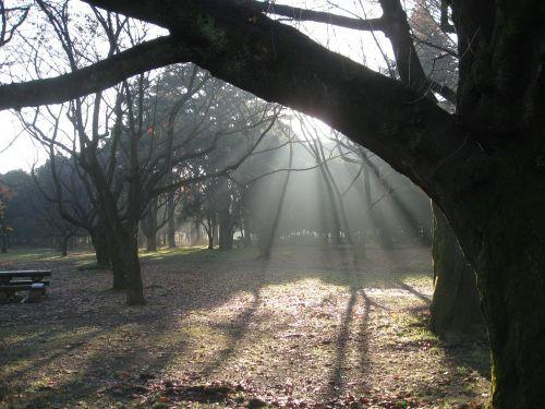 dawn trees nature