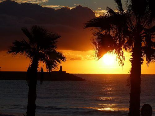 dawn palms horizon
