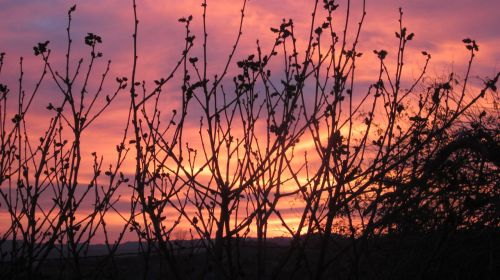 dawn nature landscape
