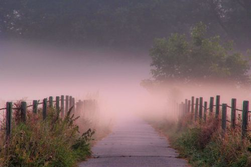 aušra,rūkas,kraštovaizdis,gamta,migla,toli,ryto migla