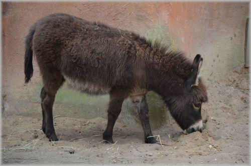 The Donkey 2