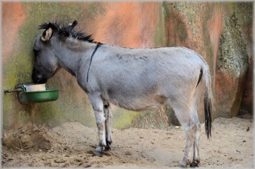 The Donkey 3
