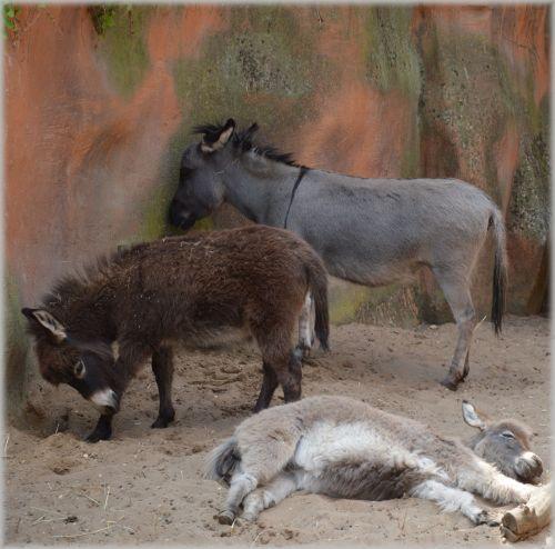 The Donkey 4