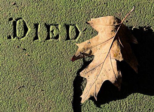 dead leaf died