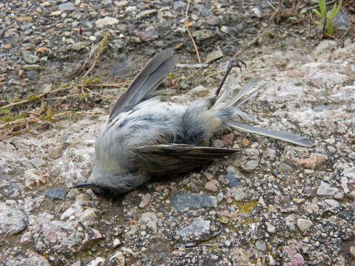 dead bird symbol metaphor
