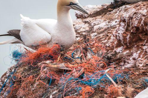 dead bird safety net spirit network