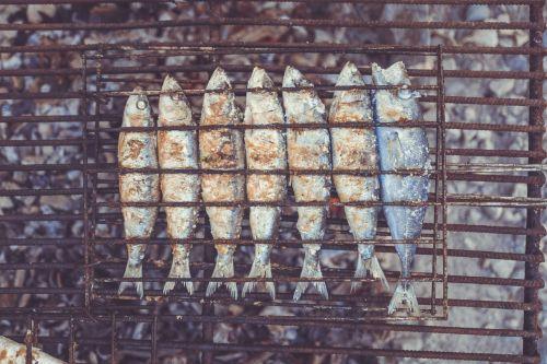 dead fish fish dead