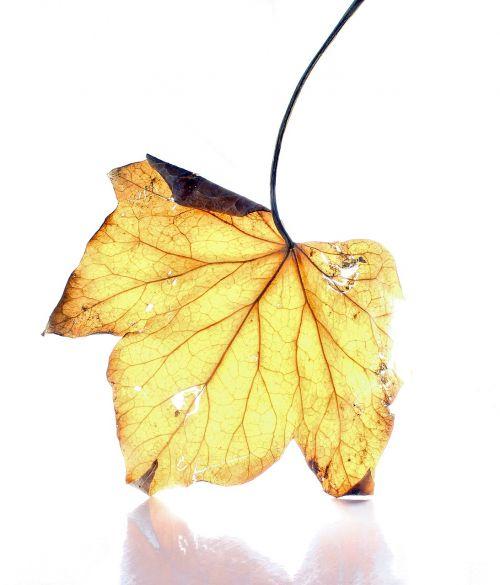 dead leaf white background light
