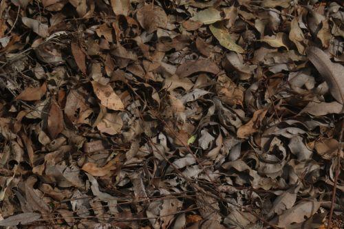 Dead Leaf Field