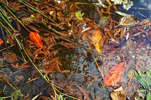 negyvi lapai,rudens lapai,adatos,vanduo,griuvėsiai,plaukiojantieji,skilimas,miręs vandenyje