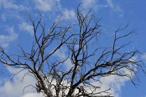 Dead Top Of Tree