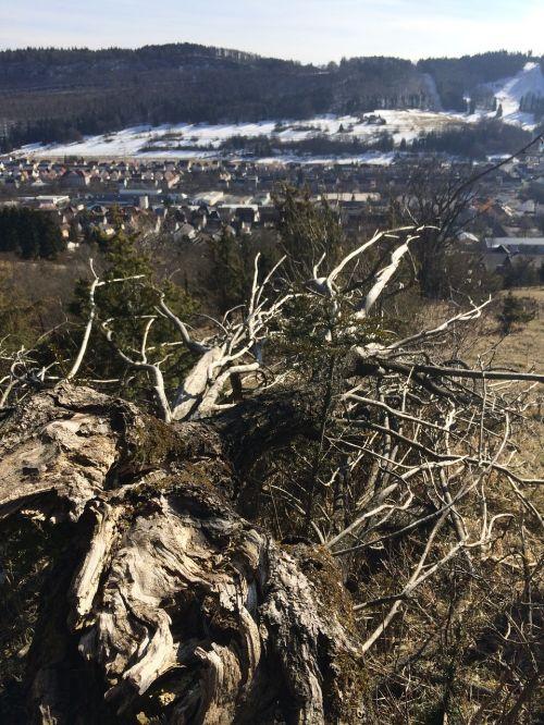 dead tree tree nature