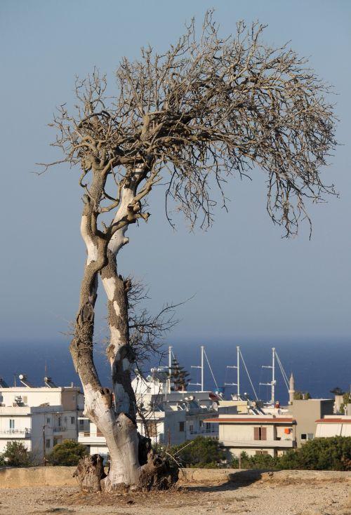 dead tree sea greece