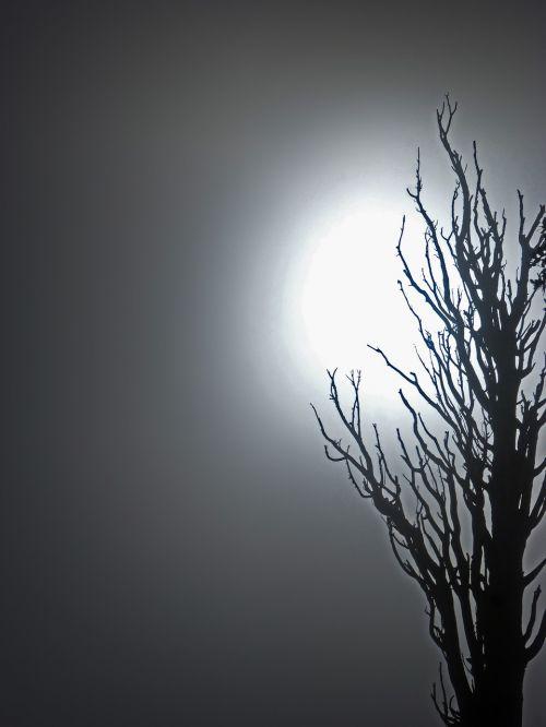 dead tree fog mystery