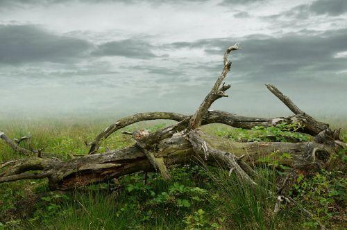 dead tree dead plant decay