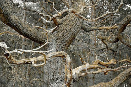 dead tree grove dead plant
