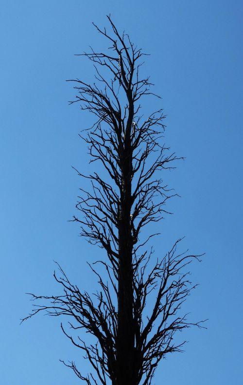 dead tree branches symbol