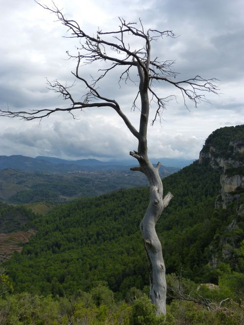 dead tree trunk forest