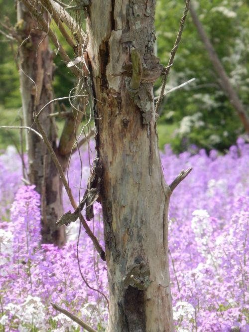 Dead Tree In Lavender Sea