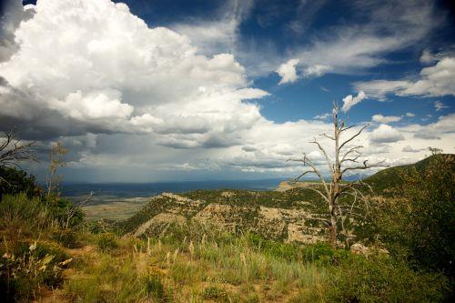 Dead Tree In Southwest
