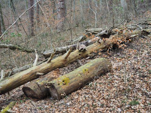 dead wood wood morsch