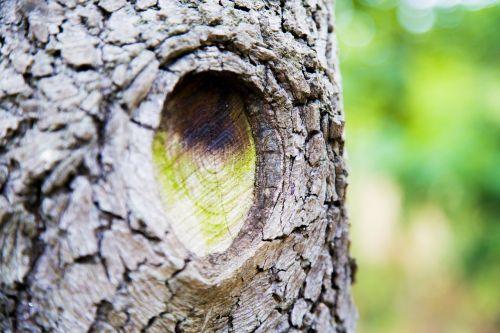 negyvas medis, eros, prisiminimai mano akyse, atmintis, medžio medis, augalas, medžio žievė, wen lu, medis akis