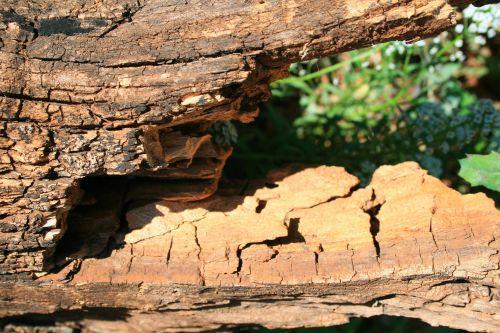Dead Wood Breaking Up