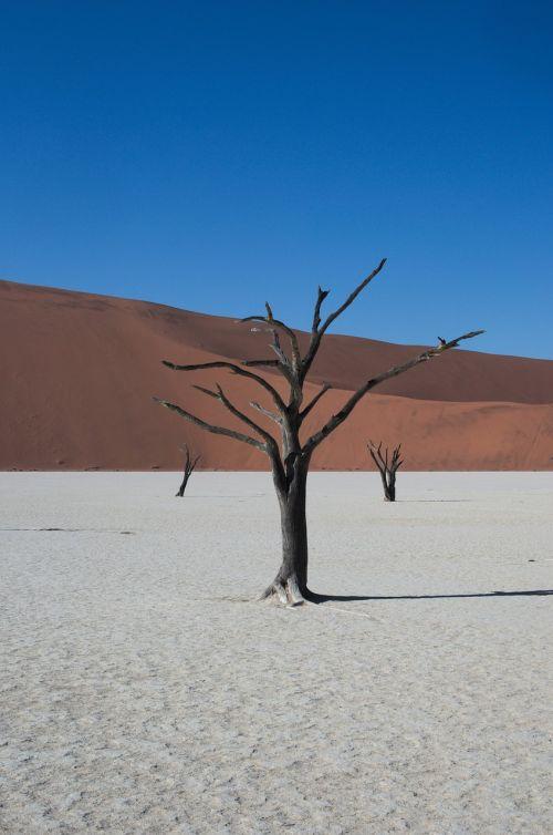 deadvlei,Namibija,dykuma,sausas,medis