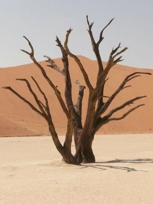 deadvlei,sahara,miręs vlei,Namibija,sausra,smėlis,kopos