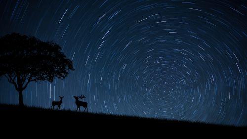 dear dears stars